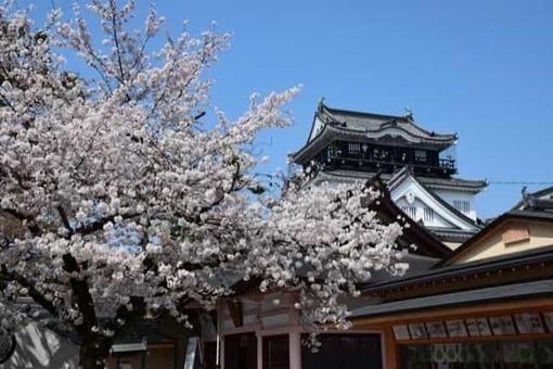 Okazakijo2 1528097687