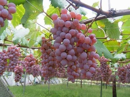 Katsunuma vineyard 02 1528089386