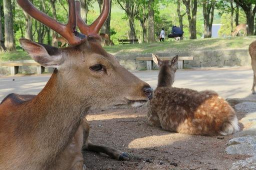 Nara park 1554079620